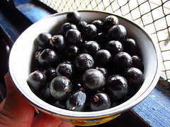 acai berry thin